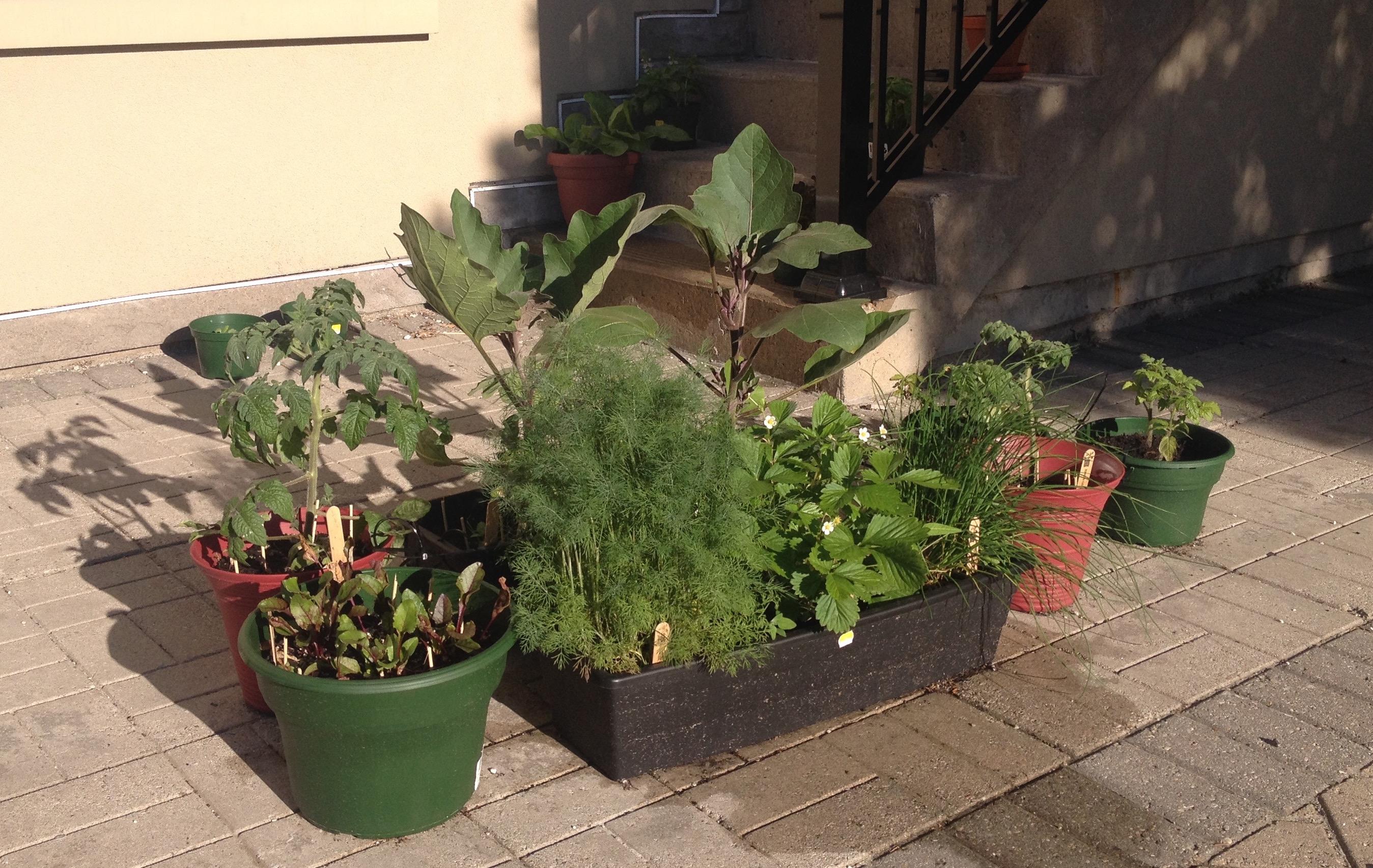 Container_Gardening