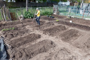 City_Garden_Allotment_2