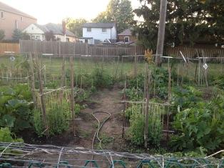 garden update_end_june